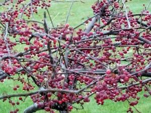 Rich Berry Color Hue